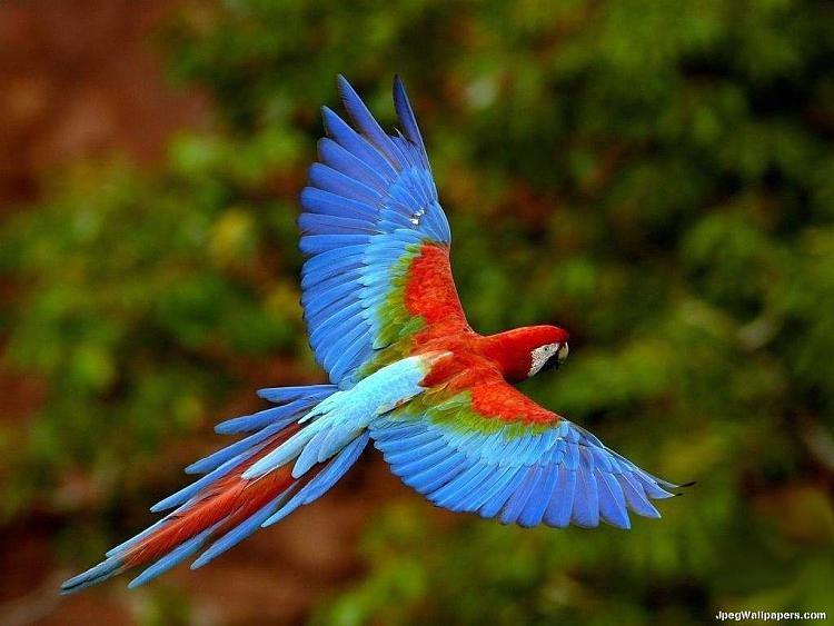 chrome and firefox-macaw-2-377250.jpeg