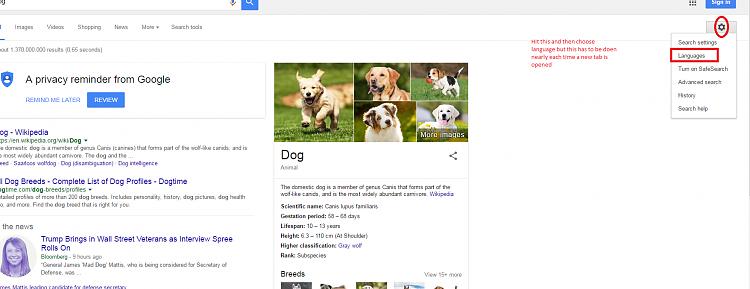 Weird browsing-dog.png
