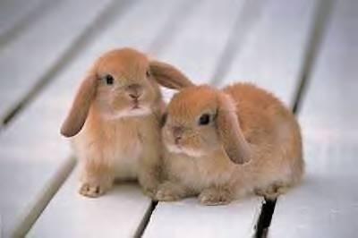 Jokes Thread 2-bunny-brown-cute-adorable.jpg
