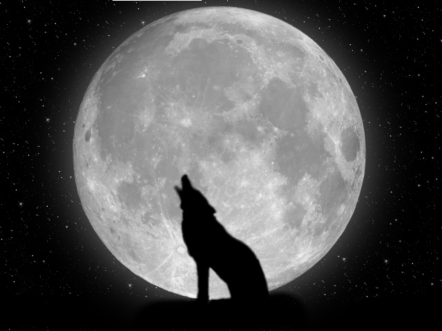 Today [5]-wolf_display.jpg
