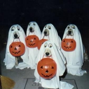 Name:  dos-halloween.jpg Views: 22 Size:  19.3 KB