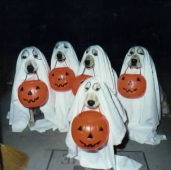 Halloween Thread-dos-halloween.jpg
