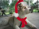 Christmas Avatars-holidoggie.png