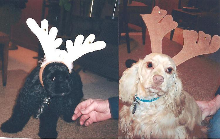Merry Christmas everyone-reindogs-2-001.jpg