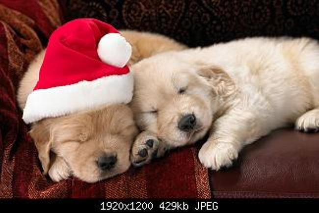 Merry Christmas everyone-happy-holidays-everyone-.jpg