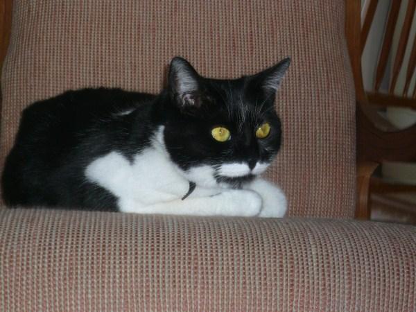 Show us your cats-bebe_p1020570-600-x-450-.jpg