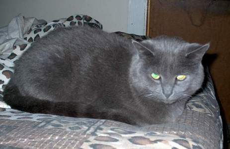 Show us your cats-semetary-my-kitterz1.jpg