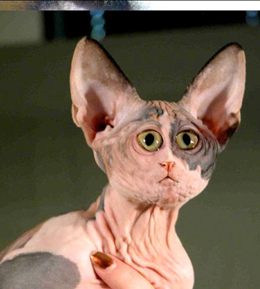 Name:  cat 1.PNG Views: 371 Size:  664.2 KB