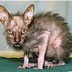 Name:  cat2.PNG Views: 804 Size:  60.1 KB