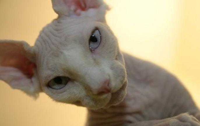 Name:  cat8.PNG Views: 352 Size:  446.4 KB
