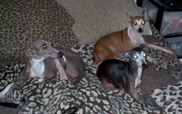 show us your dog-doggies.jpg