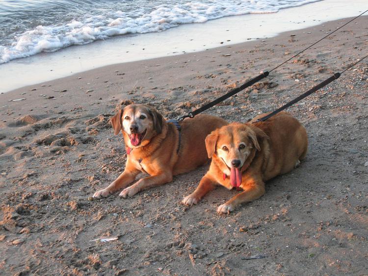 show us your dog-img_0745.jpg