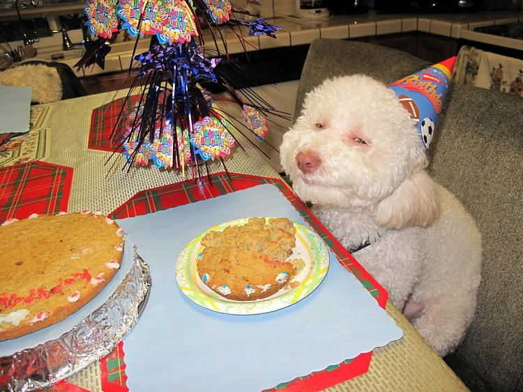-birthday_dog.jpg