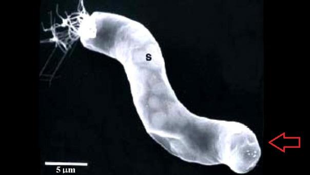 NASA scientist finds evidence of extraterrestrial life-bacteria-meteorites.jpg