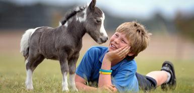 Happy Birthday Seven Forums :D-horse385_439149a.jpg