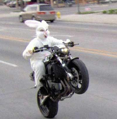 Name:  easter-bunny-motorcycle.jpg Views: 37 Size:  20.2 KB