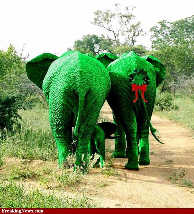 Jokes Thread 2-st-patrick-s-day-green-elephants-38854.jpg