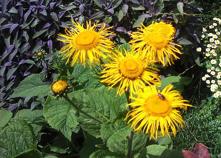 any gardeners here?-flowers..jpg