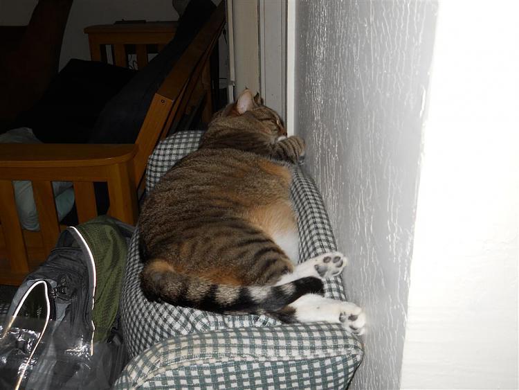 Show us your cats-dscn0129-medium-.jpg