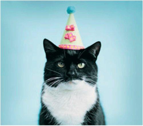 Happy Birthday Joan Archer-birthday-cat.jpg