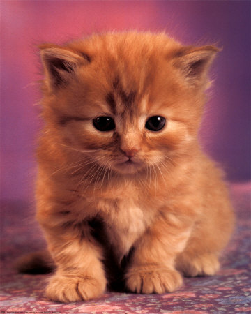 A Cat Story-cat.jpg
