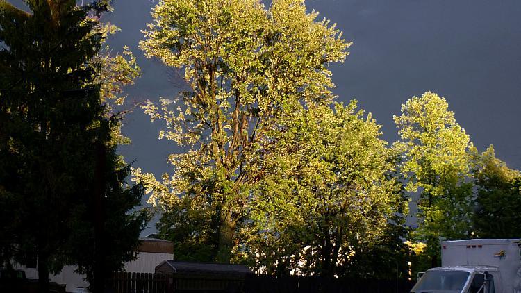 -tue-8-16-11-storm.jpg
