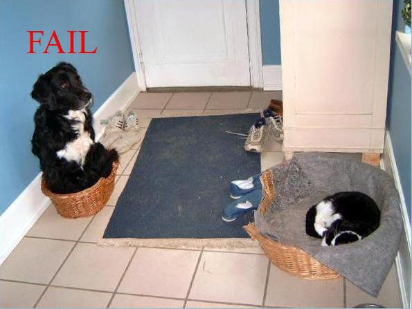 Funny and Geeky Cool Pics-dogbasketfail.jpg
