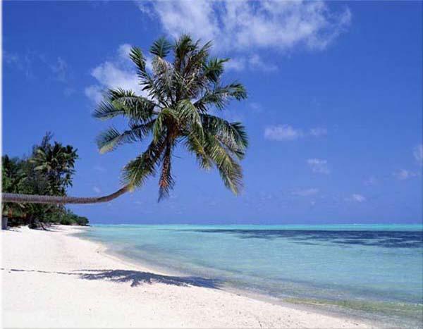 Keep One Change One [8]-sunny-beach-palm.jpg