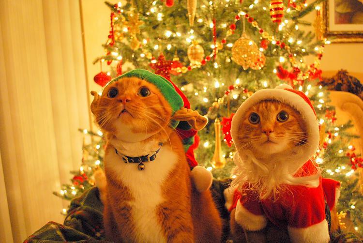 -christmas-cats.jpg