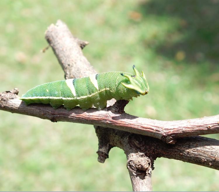 Do you believe in aliens?-caterpillar1.png