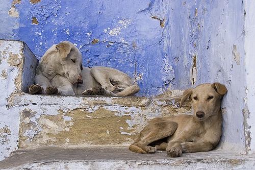 Dogs-dogs.jpg
