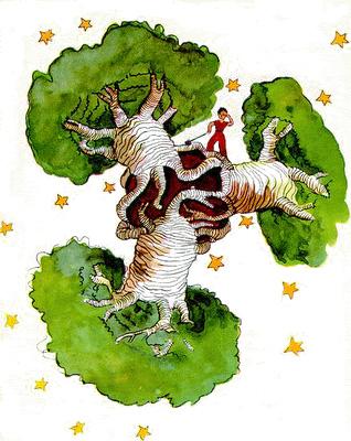 Today [9]-baobab.jpg