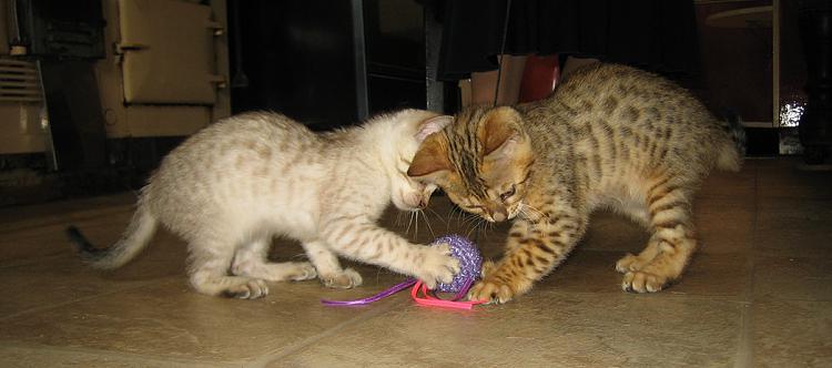 Show us your cats-saltnpepa.jpg