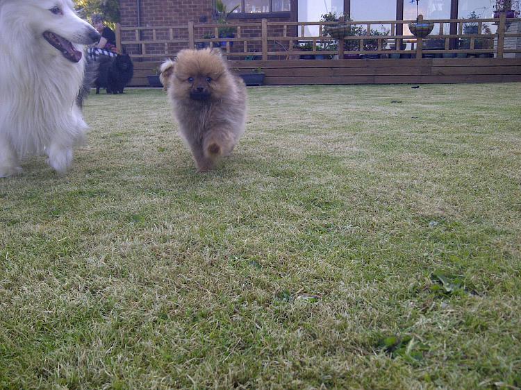show us your dog-img-20120527-00005.jpg