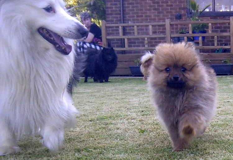 show us your dog-img-20120527-00005-1.jpg