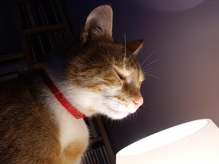 Show us your cats-bongo.jpg