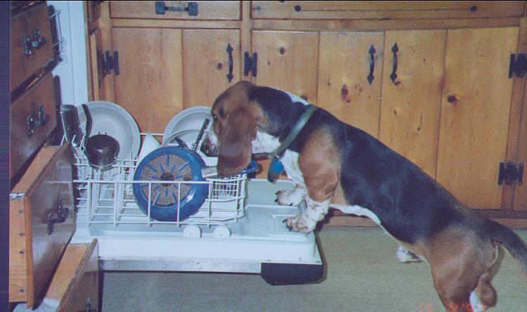 show us your dog-dishwasherbandit.jpg