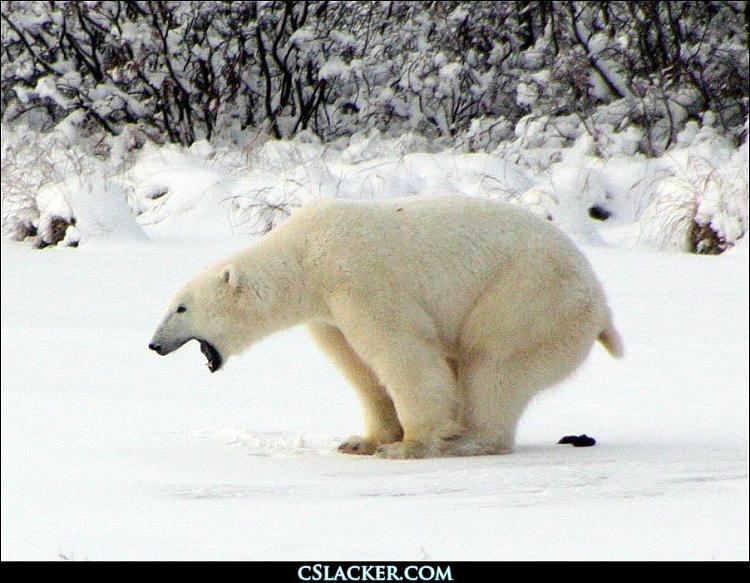 Funny and Geeky Cool Pics [2]-polar-bear-taking-dump.jpg