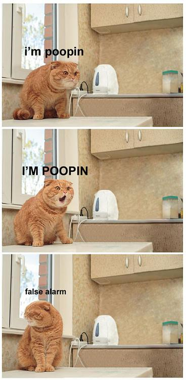 -im_pooping_cat_false_alarm.jpg