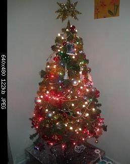 Show us your tree!-pedroc.jpg