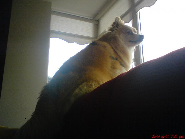 show us your dog-dsc00634.jpg