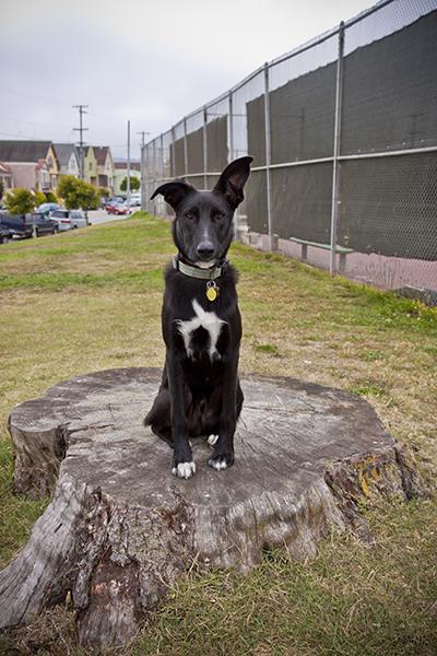 show us your dog-img_7386.jpg