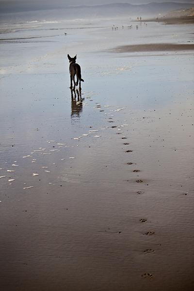 show us your dog-img_7546.jpg