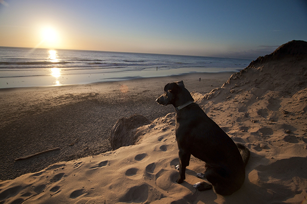 show us your dog-img_7598.jpg