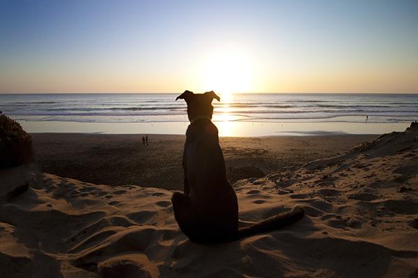 show us your dog-img_7605.jpg