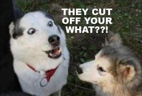 show us your dog-image004.jpg