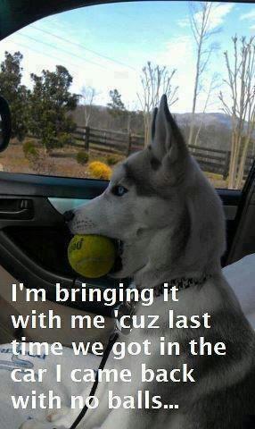 show us your dog-image002.jpg