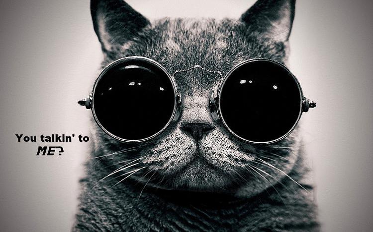 Show us your cats-tough-cat.jpg