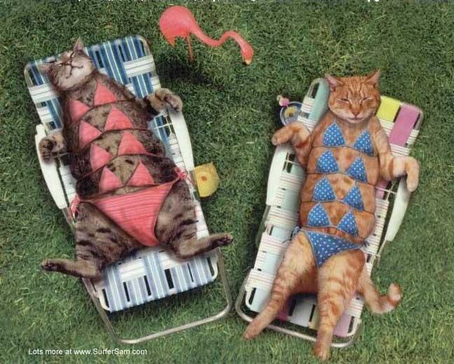 Show us your cats-bikini.jpg