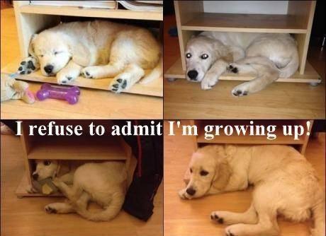 Name:  Growing up.jpg Views: 64 Size:  25.8 KB